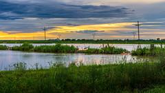 Crawfish Ponds (jciv) Tags: sunset file:name=dsc09013 farm birds water