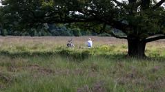 Hnig an (Theo Bauhuis) Tags: landschap boom bankje ontspannen genieten fietser tree biker heath natuurmonumenten