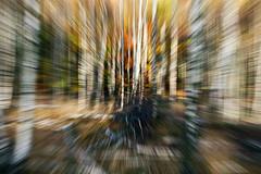 Movement by Zoom - Kodak Ektar (magnus.joensson) Tags: sweden swedish sdersen skne autumn nikon nikonfe 2550mm nikkor ais kodak ektar 100 c41