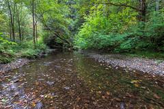 Prairie Creek Redwoods 8 (ssiegel16) Tags: prairiecreek redwoods