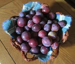 ** Nos bonnes prunes ** (Impatience_1 (Peu...ou moins prsente)) Tags: prune plum fruit panierdeprunes plumbasket m impatience coth abigfave coth5