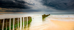 wooden breakwater ( Jenco van Zalk) Tags: breakwater holland netherlands northsea beach rainclouds clouds landscape seascape cloudscape seagull
