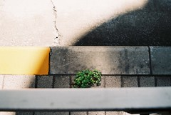To Live (YUKIHAL) Tags: pentax sl smc takumar 35mm f35 fujicolor100 135 film fujifilm nega analog