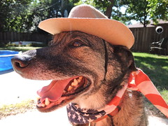 Cowboys (Andrew Penney Photography) Tags: cowboys hat dogs cowboyhat boys dressup backyard german shepard woodypinewood chewy