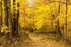 Autumn  Greetings (Lynne Dohner) Tags: autumn yellow october path indiana indianadunesnationallakeshore chellbergfarm portercountyindiana visitindiana