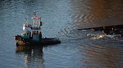 PeeWee II (drmack2) Tags: 2 pee log marine arm forrest north wee tugboat tow fraserriver