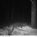 Wildlife in the Compost - 1:38 AM - November 13, 2014