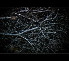 (gol-G) Tags: color japan digital 35mm sony kobe botanicalgarden a7 nokton f12 alpha7  voigtlandernokton35mmf12aspherical vmadapter ilce7