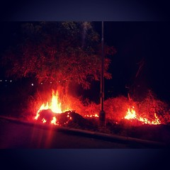 Meanwhile 'Safai Abhiyaan' :D safai includes everything IMO! (bravobharat) Tags: fire nights treeonfire