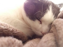 So Cozy (Ladouce25) Tags: camera light sleeping cats cat cozy chat day sleep pussy picture kitty sleepy smartphone comfy xperia