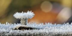 Keeping a cool head (Pog's pix) Tags: winter cold detail macro ice closeup garden screw scotland frozen cool junk frost seasonal icy icecrystals ayrshire stewarton eastayrshire macromondays keepingacoolhead keepingitcool redux2014