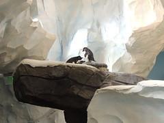 Seaworld Orlando 12-2014 (greyhound dad) Tags: christmas penguins orlando nikon florida whales seaworld p510 jamesalbright