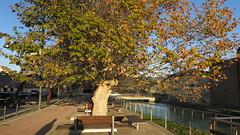 sunset along the canal (Marlis1) Tags: autumn trees wasser herbst benches bäume jesús sycamores platanen marlis1 tortosacataluñaespaña canong15