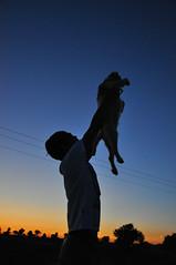 "Renacer. (""CGGS Photography"" on Facebook) Tags: trees espaa dog sun colour sol beautiful backlight contraluz puppy atardecer spain model rboles colores perro toledo fotografa renacer rearlit nikond90"