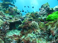 IMG_0995 (JustinField-Greens) Tags: marinepark lordhoweisland ballspyramid mtgower