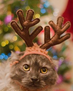 Cat Reindeer Ears - XMas 2014 by Jovan Jimenez