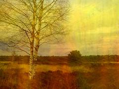 Berk (alice2037) Tags: boom berk heide kleur textuur