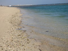 Bassa marea (103) (Naturalmentescienza) Tags: rosa acacia aquila granchio salicornia airone spinosa beccaccia cormorano spatola mangrovia tamerice