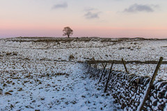 Malham Bleak Tree (Richard Hayward Photography) Tags: trip pink trees winter sunset sky sun snow tree nature beautiful clouds composition trek canon out landscape photography eos countryside photo amazing day natural image cove walk picture sunny hike richard stunning bleak hayward tarn scar epic 1022mm malham compose malhamcove gordalescar rhp gordale malhamtarn 600d