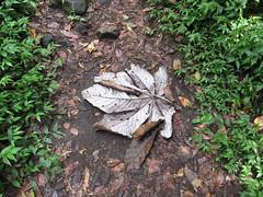 "Parc National Arenal: c'est quoi ces immenses feuilles?! <a style=""margin-left:10px; font-size:0.8em;"" href=""http://www.flickr.com/photos/127723101@N04/26295246394/"" target=""_blank"">@flickr</a>"