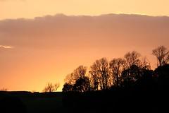 Montrose Basin Nature Reserve Sunset (richardblackburn1974) Tags: sunset bird nature reserve basin hide montrose shelduck