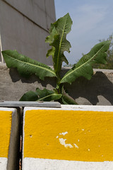 "giallo verde blu  #morrodalba #italy #clod #giornatedifotografia #sensi #enricoprada #canon #colors #natura (claudio ""clod"" giuliani) Tags: italy canon clod sensi morrodalba giornatedifotografia"
