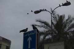 Muharraq Souq (heshaaam) Tags: bw bahrain pigeons souq bazar muharraq suq