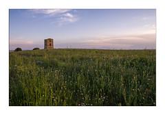 Que Electricidad (Sonia_Ggonzalez) Tags: telegrafo dueas nikon verde green cielo sky atardecer crepusculo viento electricidad sonia d7000 campo primavera spring amapola