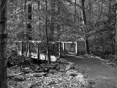Bridge in the woods (pilechko) Tags: bridge blackandwhite nature monochrome woods path newhope bowmanshill