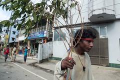 H504_3405 (bandashing) Tags: street trees red england people green manchester watch crowd logs mad sylhet bangladesh carry mentalhealth socialdocumentary aoa shahjalal bandashing akhtarowaisahmed treecuttingfestival lallalshahjalal