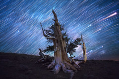 'Spinning Blue Marble' - White Mountains, California. (Gavin Hardcastle - Fototripper) Tags: california trees white mountains pine night forest way stars photography landscapes trails astro galaxy astrophotography milky bristlecone nightscapes galactic milkyway gavinhardcastle fototripper