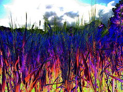 (psychedelic world) Tags: trees sky field barley fire feld himmel psychedelic feuer bäume psychedelisch gerste wohltorf psychedelicworld