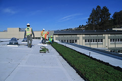 Korematsu Middle School - Portola Valley - First LiveRoof green roof modules installed (LiveRoof) Tags: california plants sustainability greenroof portolavalley livingroof plantedroof liveroof korematsumiddleschool florasource