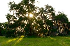 DSC_3381 (BeautifuLight) Tags: sunset golden hour sunburst sunstar