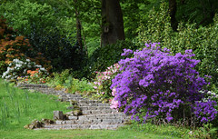 Shalford House Open Garden (Mark Wordy) Tags: westsussex path steps azalea ngs nationalgardensscheme englishcountrygarden opengarden shalfordhouse kingsleygreen
