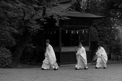 Hikawa Shrine, Omiya City, Saitama, Japan (Nihon Zaichuu Scotto) Tags: japan shrine power spot sacred priest saitama jinja omiya priests clergy kannushi