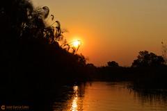 15-09-18 Ruta Okavango Botswana (463) R01 (Nikobo3) Tags: frica botswana delta deltadelokavango okavango parque naturaleza paisajes travel viajes nikon nikond800 d800 nikon247028 nikobo josgarcacobo flickrtravelaward ngc unesco omot twop color culturas puestadesol