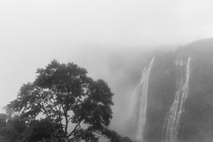 Nature's Mood | Jog Falls,Karnataka,India. (vjisin) Tags: waterfalls falls jog karnataka india asia inexplore composition tree water mist fog cwc chennaiweekendclickers blackandwhite monochrome monsoon westernghats ghats nikond3200 nikonofficial nikon nikonindia cwc534 twop outdoor sky serene cloud
