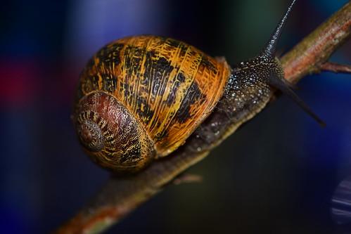 Un caracol comun.   por ohb