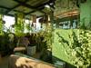 rooftop (S_Artur_M) Tags: india indien travel reise gangtok sikkim rooftop green panasonic lumix tz10