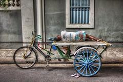 Flat Bed Rickshaw (D-W-J-S) Tags: india rickshaw bike man sleep snooze bicycle
