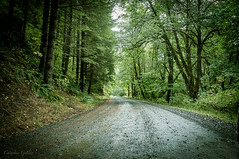Oregon...Lost road (Photography by Chrystee) Tags: trees fall nature rain oregon forest drive greentrees landscapephotography oregonroads oregoninfall