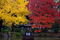 Red and Yellow (somazeon) Tags: autumn red water yellow japan tokyo panasonic 日本 東京 m43 日比谷公園 lumixgx7