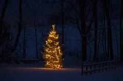 Winter Nights (Matt Champlin) Tags: christmas winter light holiday cold beautiful up canon outdoors december warmth christmastree celebration lightup cheer 2014 christmastreeoutside