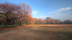 IMG_0301_303  HDR (vicjuan) Tags: japan geotagged tokyo shinjuku   hdr shinjukugyoen   tonemapping 20141129 geo:lon=13970854 geo:lat=35687293