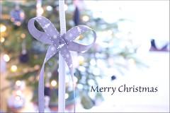 Merry Christmas! (haberlea) Tags: christmas tree green grey lights christmastree christmasdecorations bow athome ribbon merrychristmas