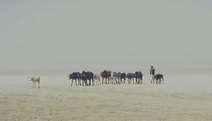 ' Going back to home ' (oliurrahmanpritom) Tags: morning winter light sunlight lights cow nikon village desert cattle foggy bangladesh