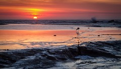 Mollymook morning (danpalmer) Tags: morning bird water sunrise coast early fishing warm warmth