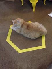 Just Barely Fits (sjrankin) Tags: california animal northerncalifornia cat circle nobuo 14november2014