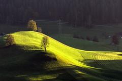 Three Trees in the Sun (Bephep2010) Tags: sun tree schweiz switzerland minolta sony meadow wiese bern alpha sonne 77 baum emmental 70200mm eggiwil 2682118 slta77v
